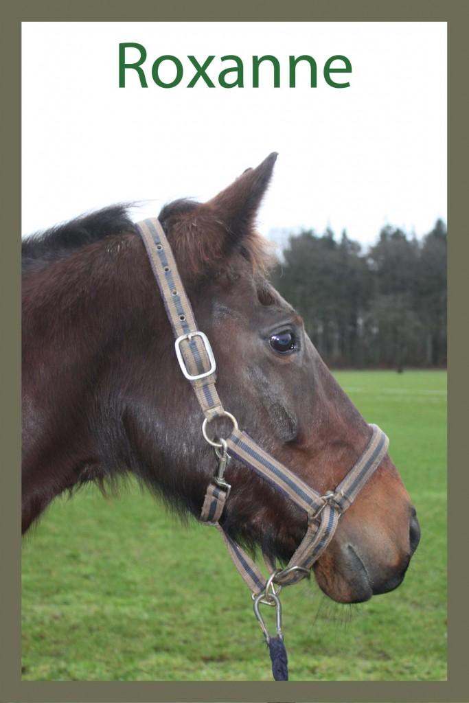 Naam: Roxanne - geslacht: merrie - kleur: bruin - geboortedatum: 18-04-1998