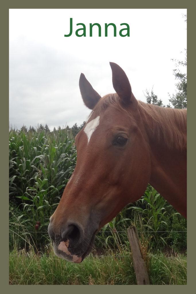 Naam: Janna (Wincilla) - geslacht: merrie - kleur: vos - geboortedatum: 14-07-2003