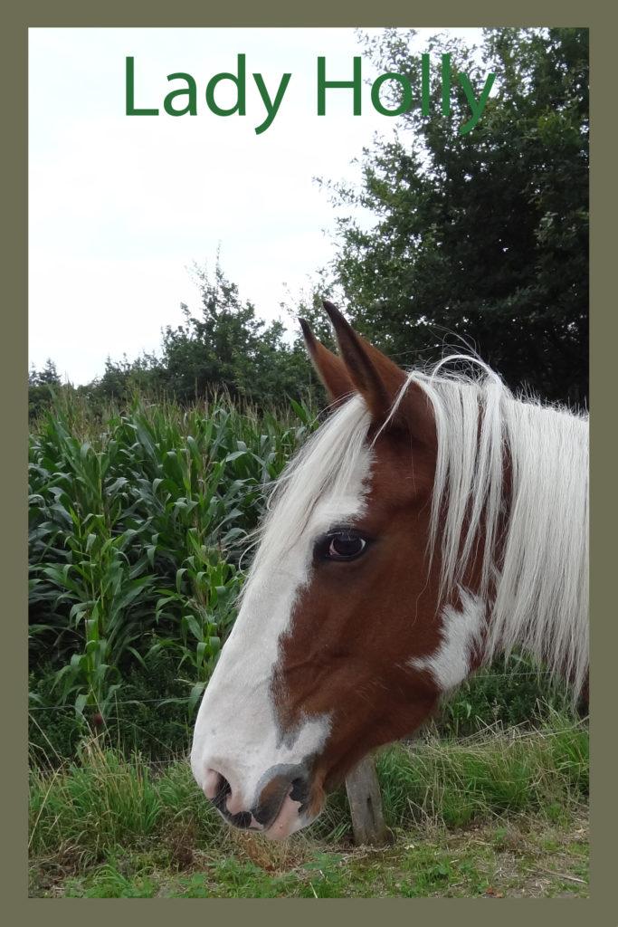 Naam: Lady Holly - geslacht: merrie - kleur: bont - geboortedatum: 01-01-2009
